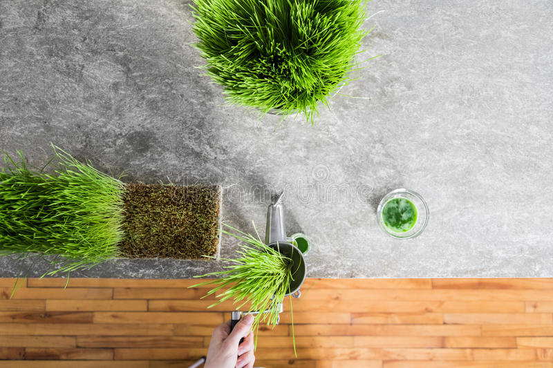 Top View of Wheatgrass Extraction in Action on the Kitchen Count. Ertop using a Metal Manual Juicer stock image