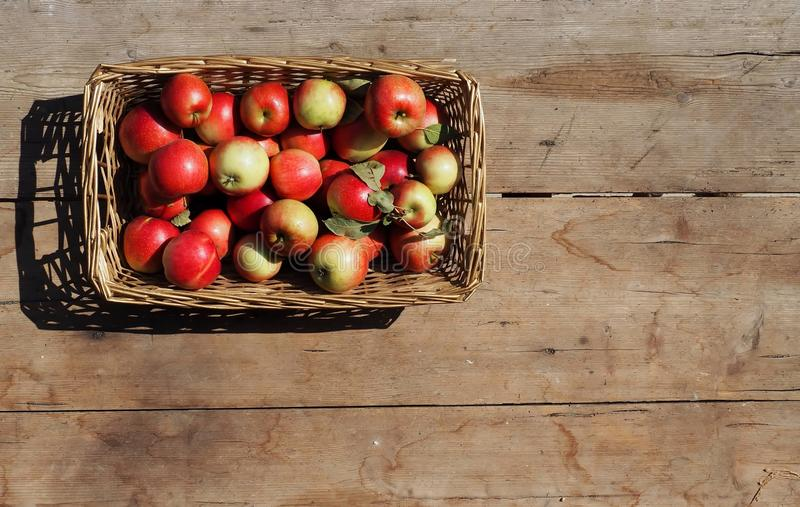 Top view of a wicker basket full of small yellow and red apples, under the sunlight . Old and worn table on background stock photos