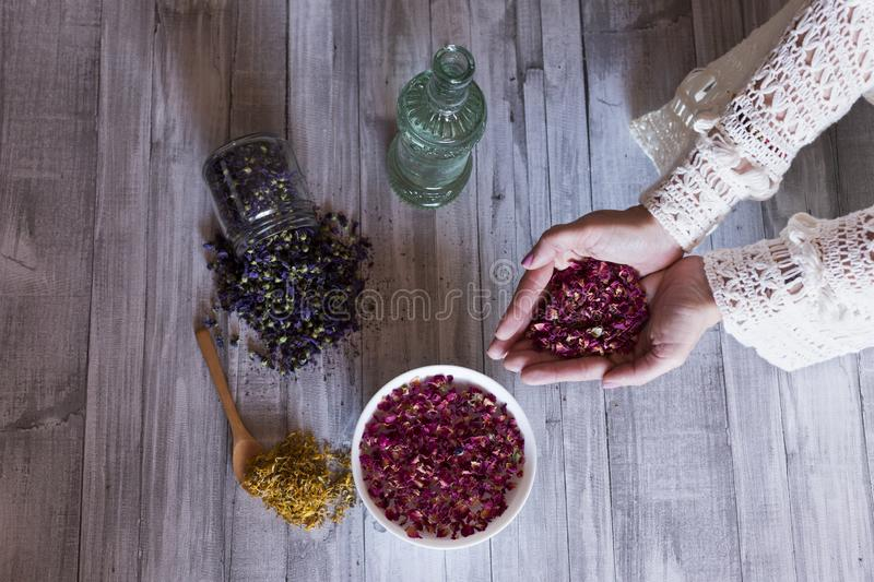 Top view of woman hands holding dried roses leaves. Healthy lifestyle concept. Indoors. Grey wood table background. Yellow royalty free stock photo