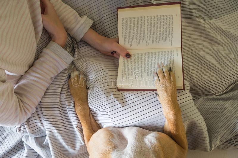 Reading book in bed with a dog. stock photography
