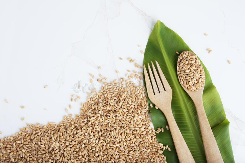 Top view. Wooden Spoon filled with agricultural seeds. Wheat grains as agricultural background stock images