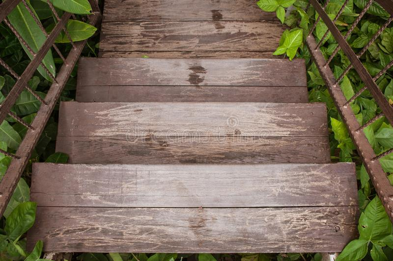 Wooden stairs or walkway go down to outdoor garden surrounded with green trees. royalty free stock image