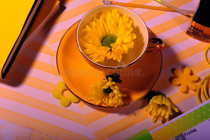 Top View of Yellow Cup with Yellow Daisy Flower royalty free stock photos