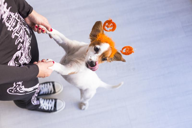 Top view of a young woman with her cute small dog wearing a pumpkin diadem. Woman wearing a skeleton costume. Halloween concept. Indoors, holiday, mexican royalty free stock images