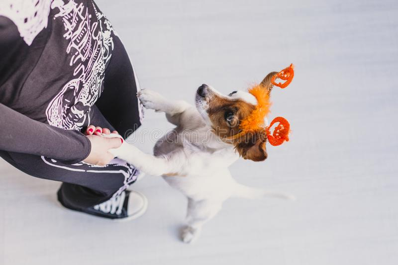Top view of a young woman with her cute small dog wearing a pumpkin diadem. Woman wearing a skeleton costume. Halloween concept. Indoors, holiday, mexican stock image