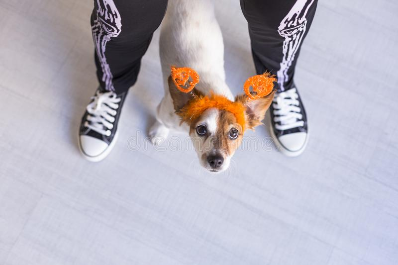 Top view of a young woman with her cute small dog wearing a pumpkin diadem. Woman wearing a skeleton costume. Halloween concept. Indoors, holiday, mexican royalty free stock photos