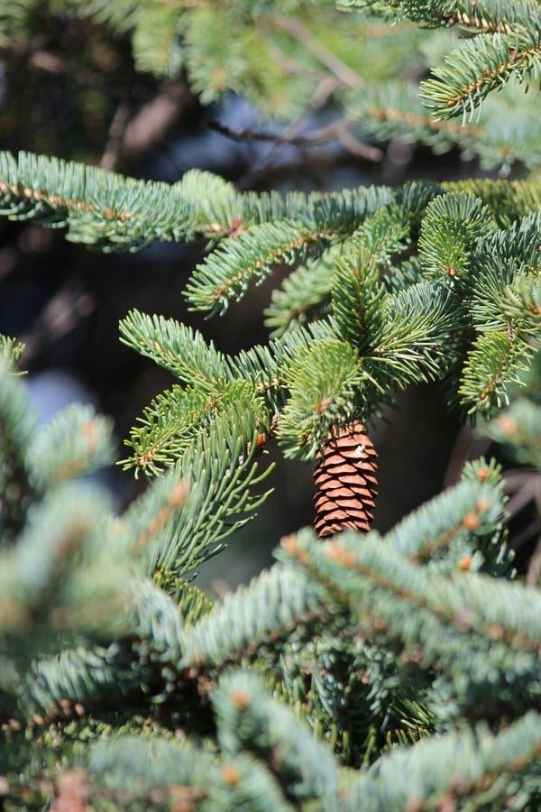 Topetón en el árbol foto de archivo libre de regalías