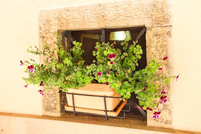 Topf Blumen in den Wänden einer Nische des Hauses stockfotografie
