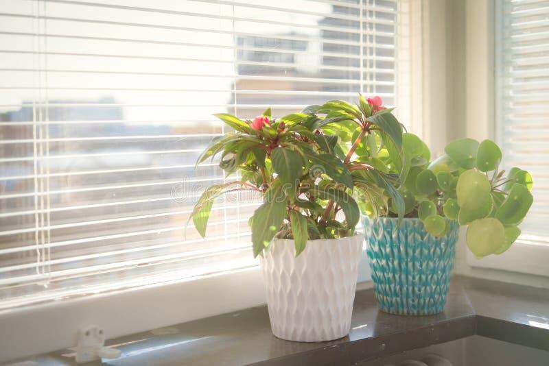 Topf der Blume zwei auf dem Fensterbrett lizenzfreies stockbild