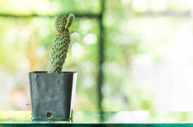 Topf der Kaktusdekoration im Raum lizenzfreie stockfotos