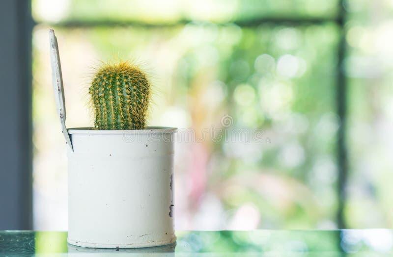Topf der Kaktusdekoration im Raum stockbild