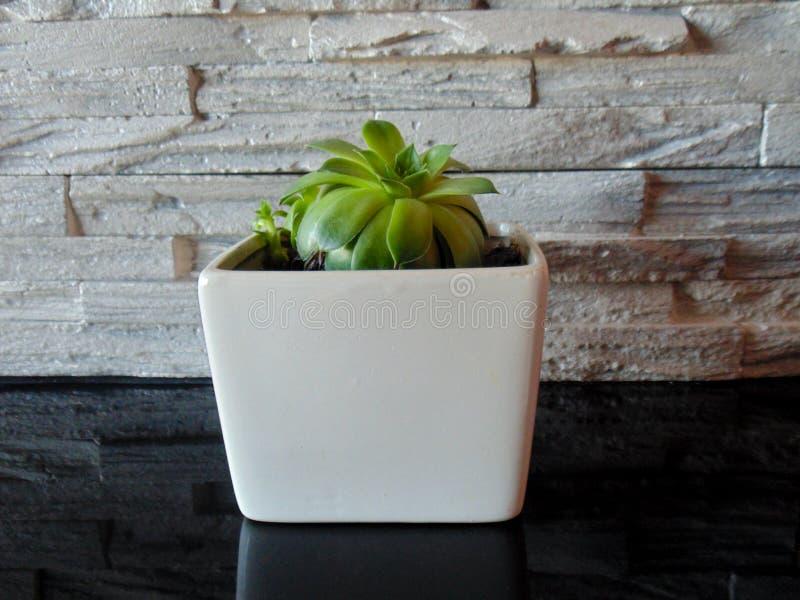 Topf der weißen Blume neben Steinwand stockfotografie