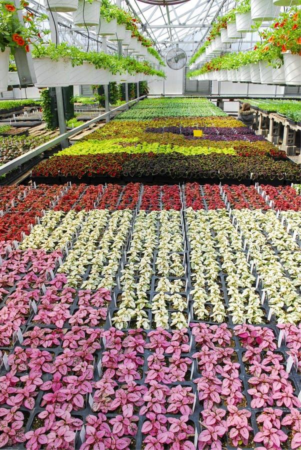 Topfpflanzen in der Gewächshaus-Kindertagesstätte lizenzfreie stockfotos