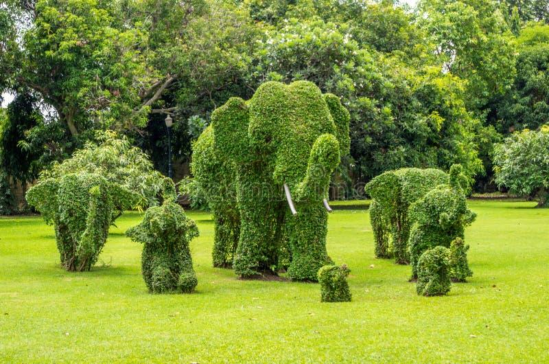 Topiaire, éléphants équilibrés hors des arbustes image stock