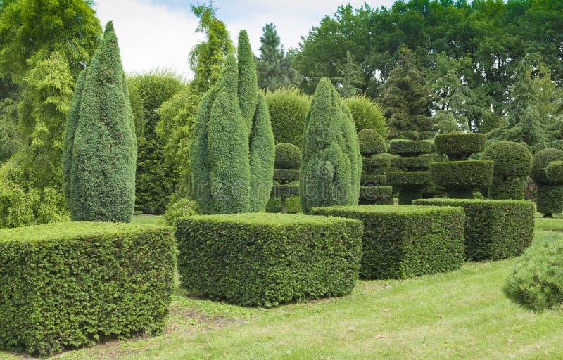 topiary сада стоковое изображение