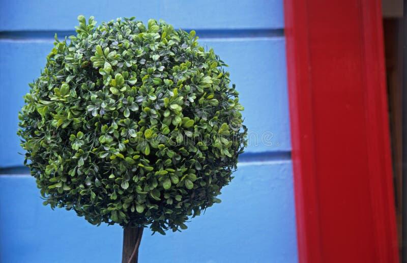 Topiary lizenzfreies stockfoto