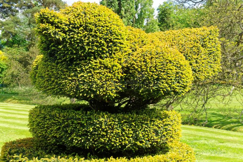 Topiary Bird in English Garden royalty free stock images