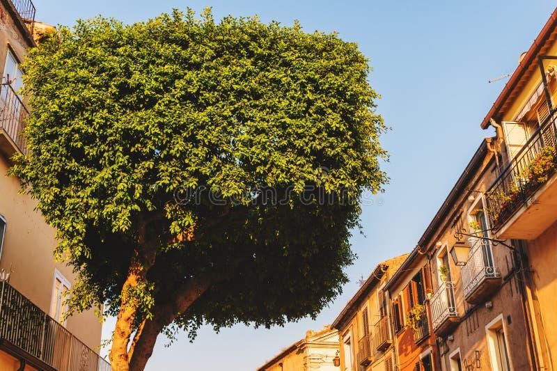 Topiary boom in de vorm van een cilinder stock afbeelding