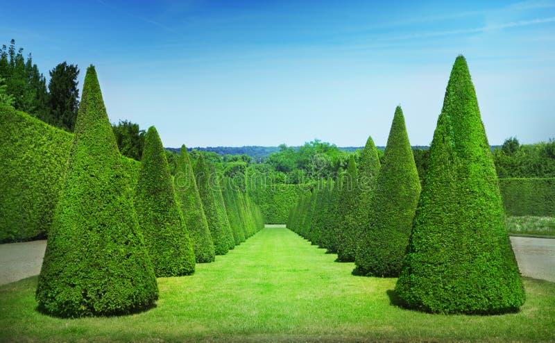 Topiary trees stock image