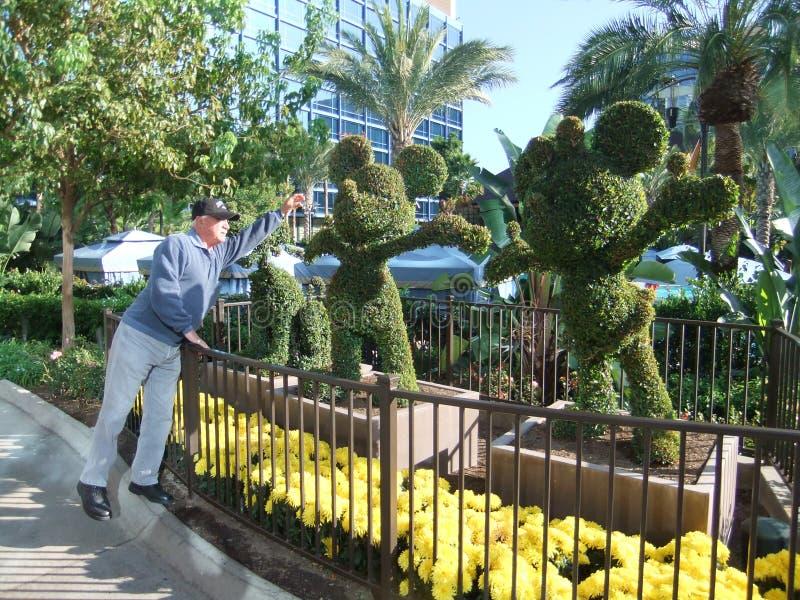 Topiary de Mickey Mouse com um homem que tenta à emenda seu nariz fotografia de stock royalty free