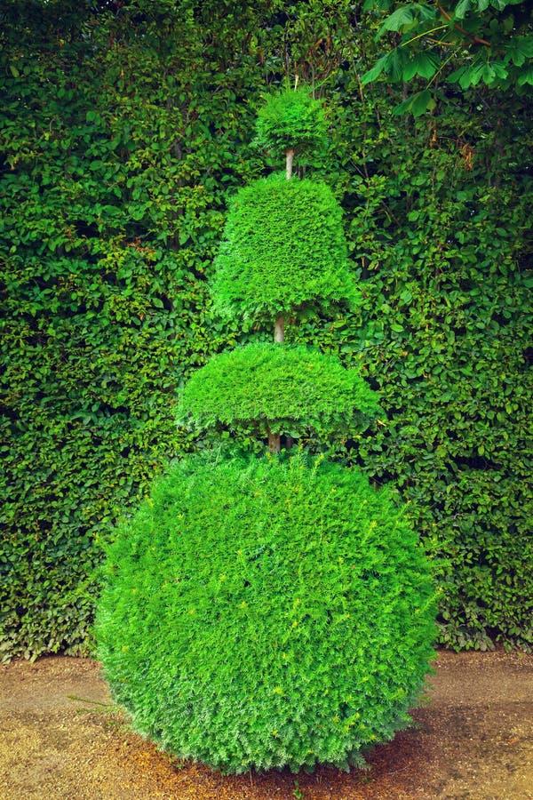 topiary drzewo zdjęcie royalty free