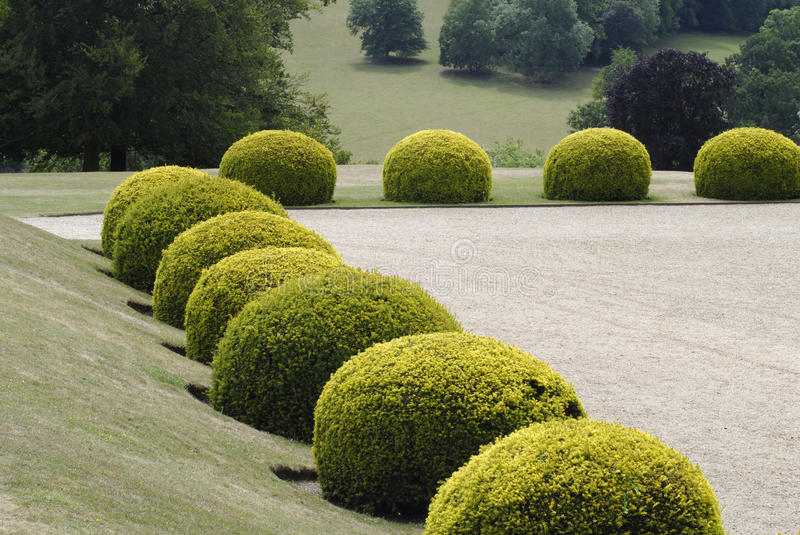 Topiary in an English Country garden. royalty free stock image