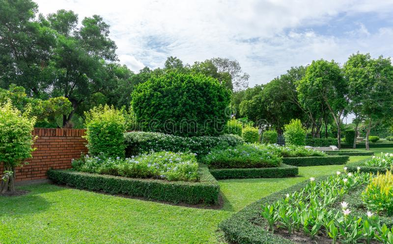 Topiary English formal garden style, gardens with geometric shape of bush and shrub, decoration with flowering plant blooming. On green leaf of Philippine tea stock photography
