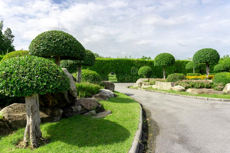 Topiary garden style, asphalt road in the gardens with geometric shape of bush and shrub, decoration with colorful flowering plant. Blooming, green leaf of stock photo