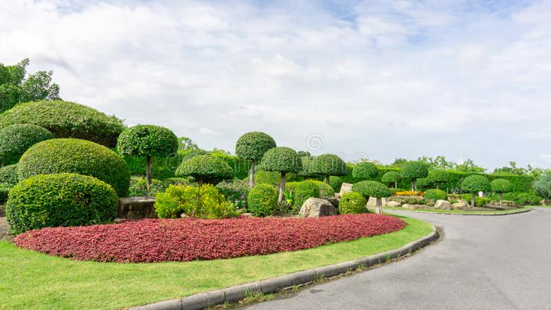 Topiary garden style, asphalt road in gardens with hedge round shape of bush and shrub, decoration with colorful flowering plant. Blooming, Philippine tea plant royalty free stock photography