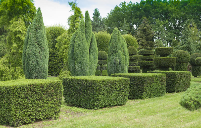 Topiary in the garden stock image