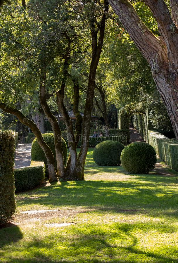 Topiary in the gardens of the Jardins de Marqueyssac in the Dordogne region of France.  stock photography