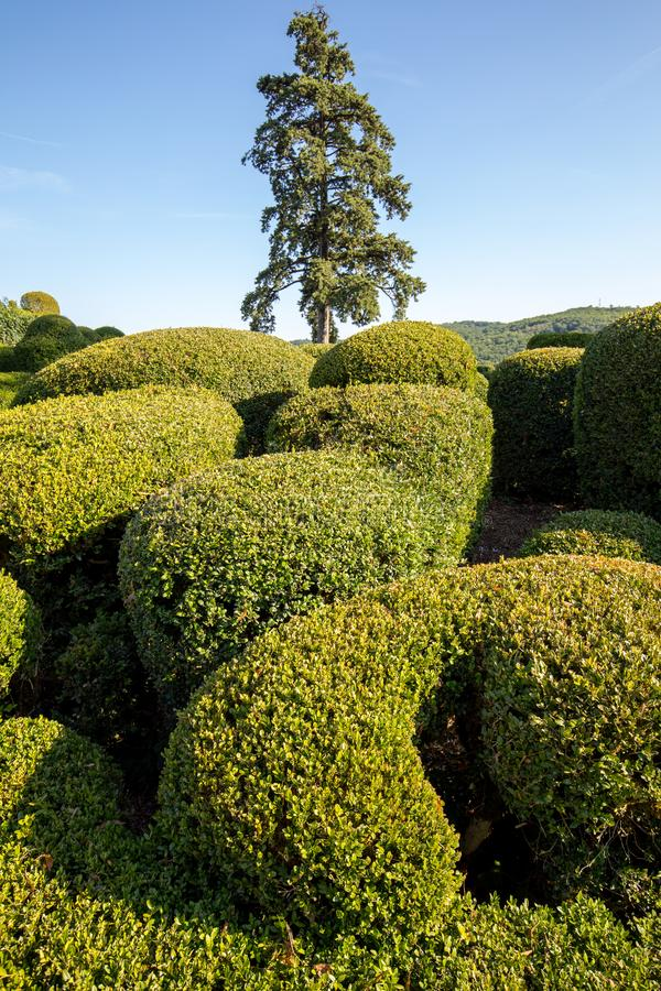 Topiary in the gardens of the Jardins de Marqueyssac in the Dordogne region of France.  royalty free stock image