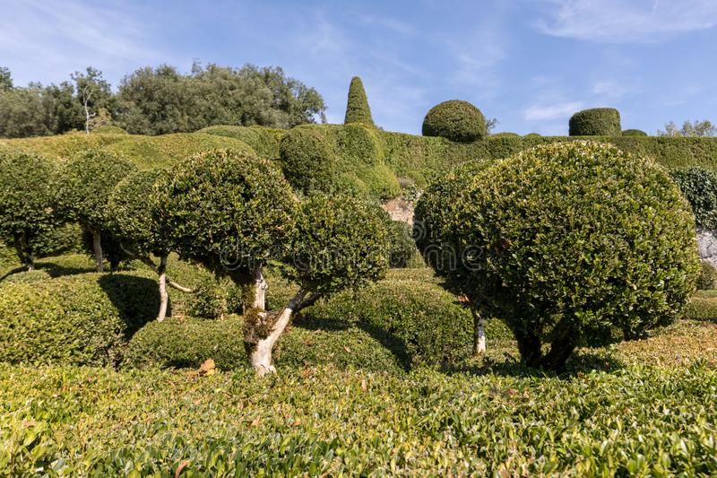 Topiary in the gardens of the Jardins de Marqueyssac in the Dordogne region of France. Topiary in the gardens of the Jardins de Marqueyssac in the Dordogne royalty free stock image