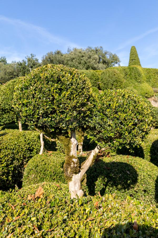Topiary in the gardens of the Jardins de Marqueyssac in the Dordogne region of France. Topiary in the gardens of the Jardins de Marqueyssac in the Dordogne stock image