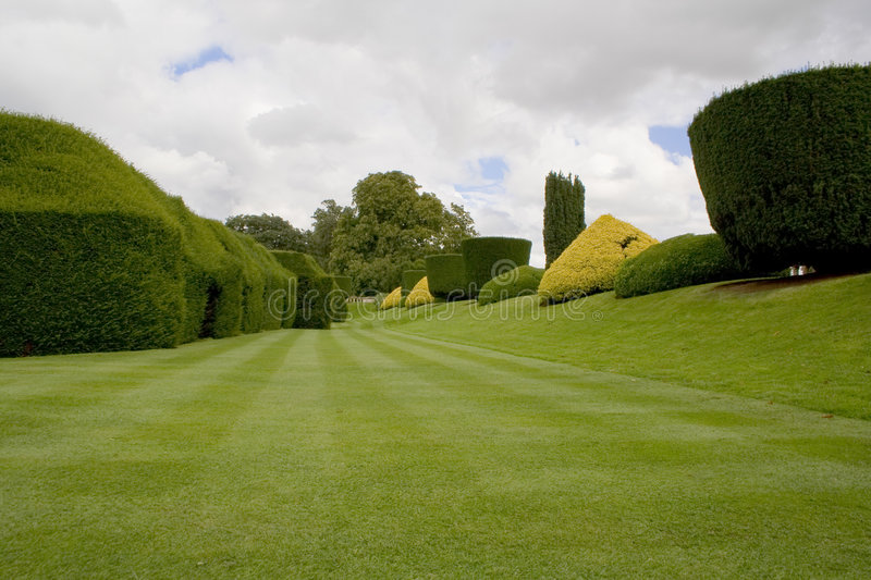 Topiary hedges and lawn. Lawn with topiary hedges and bushes royalty free stock image