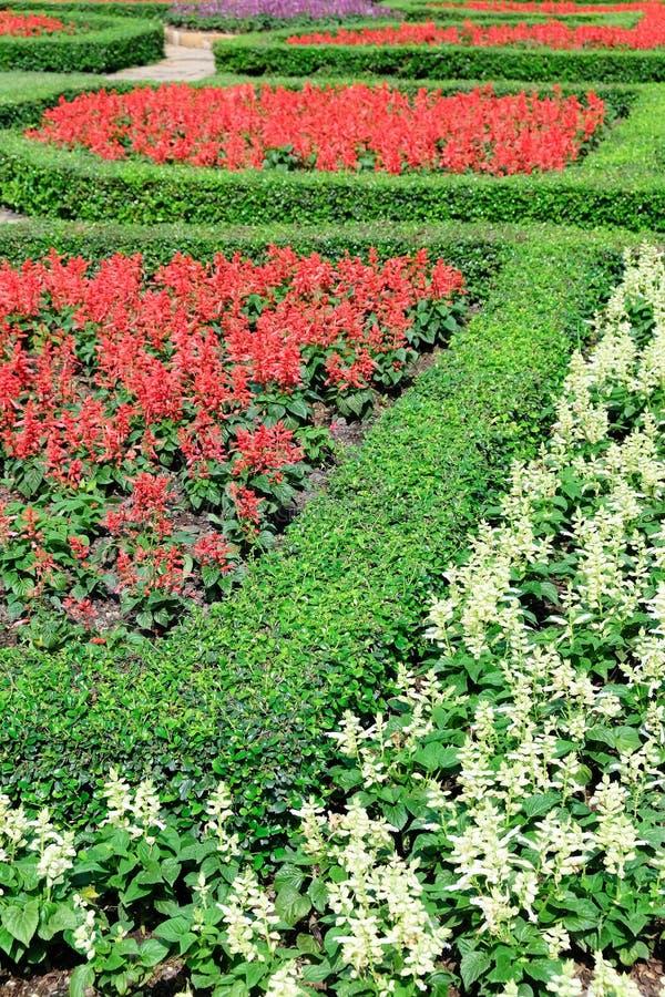 Topiary i en engelsk formell trädgård arkivbild