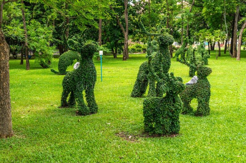 Topiary, Kaninchen getrimmt aus Sträuchen heraus stockfotografie