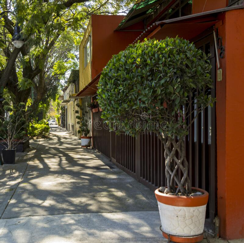 Topiary tree in flower pot outside a house in Mexico City. In December 2019 stock photo