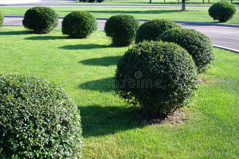 Topiary trimmed bush stock images