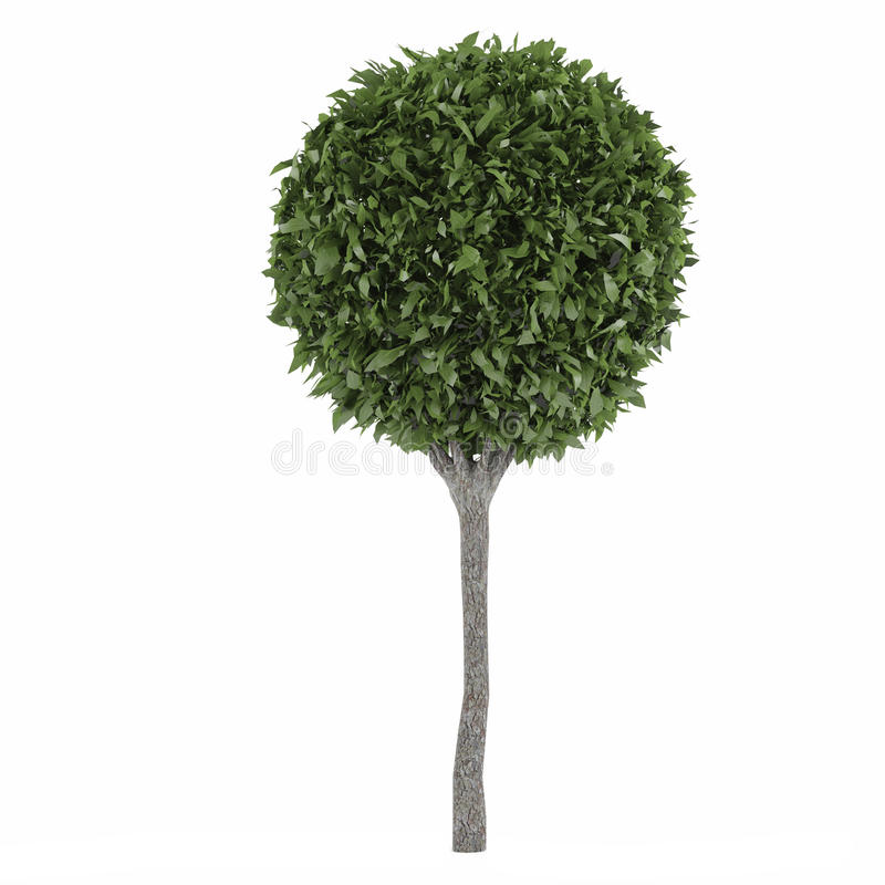 Topiarybäume lizenzfreie abbildung