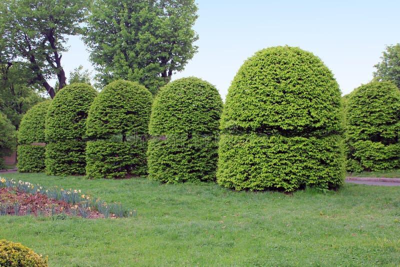 Topiaryträdgård i den nationella botaniska trädgården, Kiev arkivfoto
