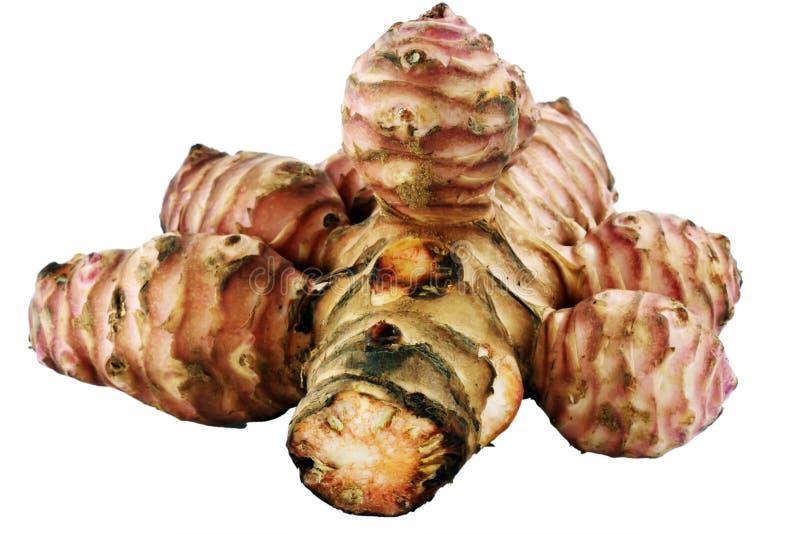 Topinambour (Helianthus tuberosus). Or artichoke or Canada potato and etc stock photos