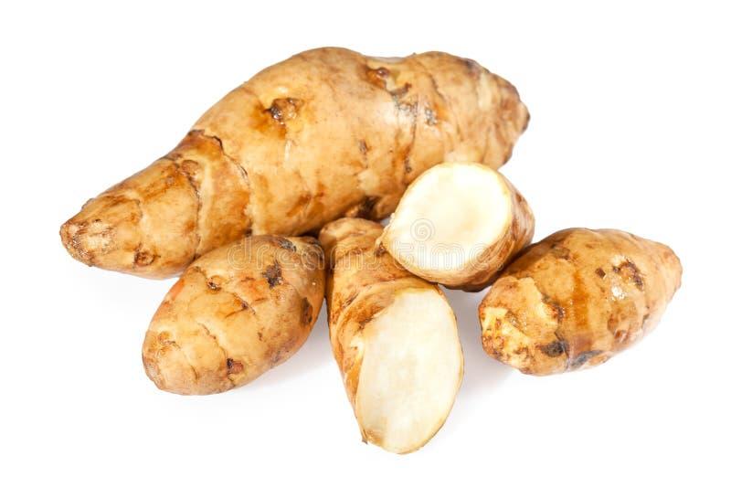 Topinambur o verdure del sunroot immagine stock libera da diritti
