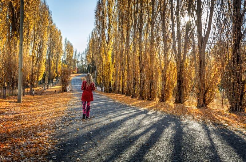 Topole wzdłuż wiejskiej wiejskiej drogi zdjęcie royalty free