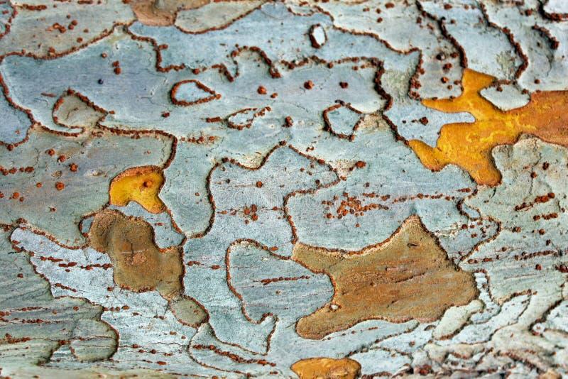 Topologie oder Muster der Baumrinde stockfoto