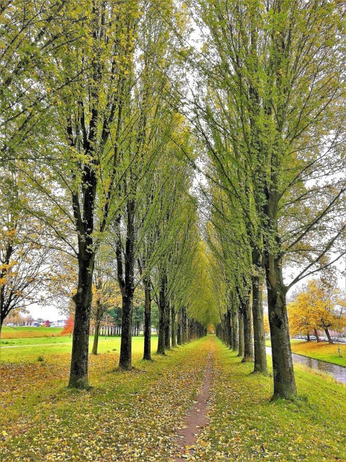 Topolowa ścieżka w jesieni zdjęcia royalty free