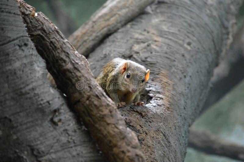 toporagno di albero fotografia stock libera da diritti