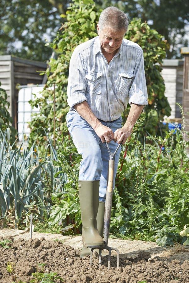 Toppa di verdure di scavatura dell'uomo senior su assegnazione immagini stock libere da diritti