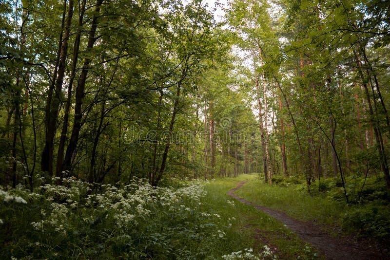 toppa nella foresta fotografie stock libere da diritti