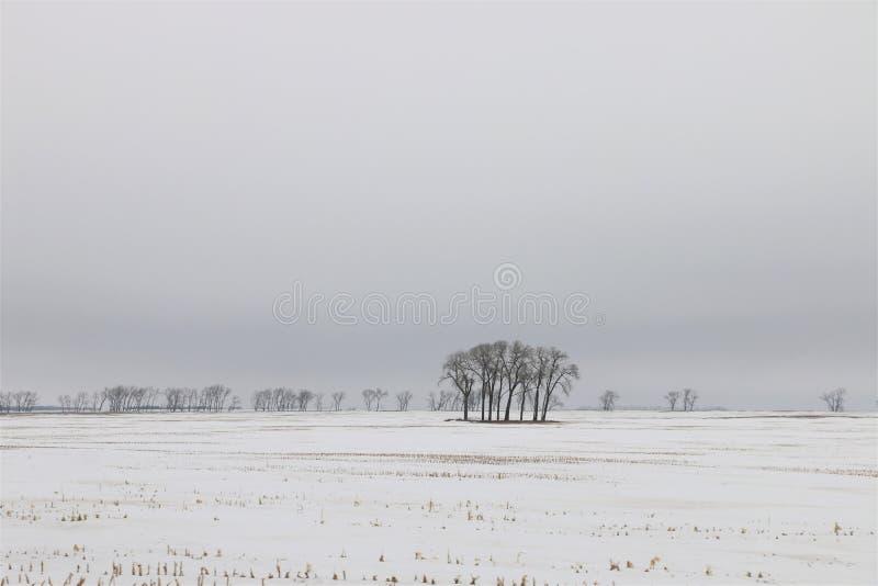 Toppa sola degli alberi in neve immagine stock